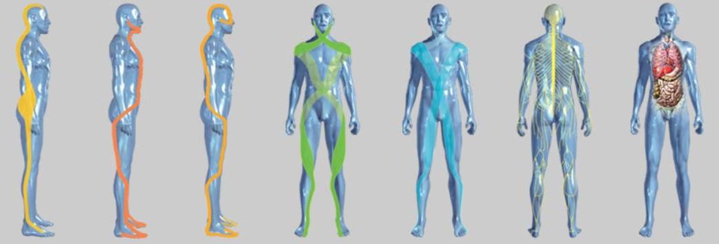 Le catene muscolari